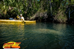 Homosassa-River-2020-51