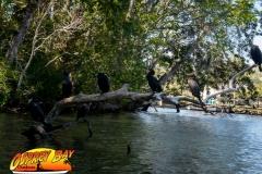 Homosassa-River-2020-58
